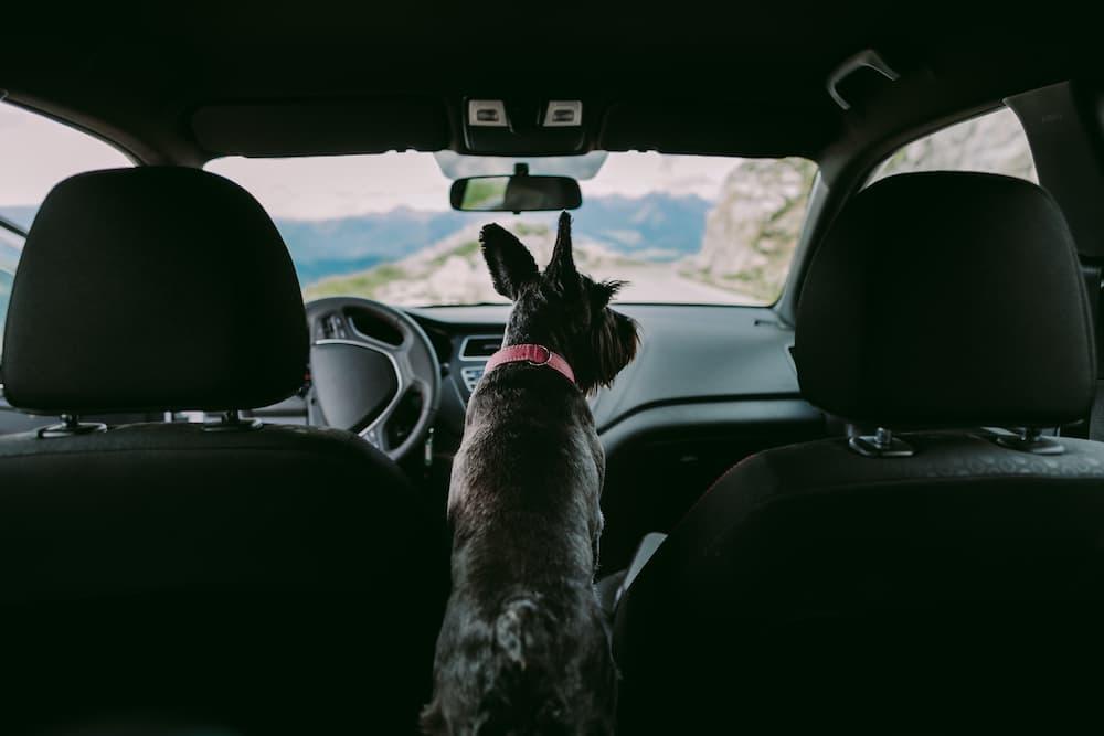 come portare in auto il cane